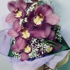 Орхидея, цимбидиум, гипсофил, аспедистра