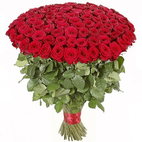 Букет из 151 красной розы, 70 см